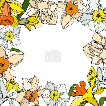 Illustration for Vector Narcissus floral botanical flower. Wild spring leaf wildflower isolated. Black and white engraved ink art. Frame border ornament square on white background. - Royalty Free Image
