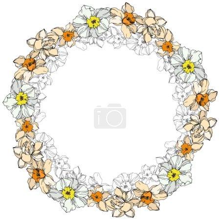 Illustration pour Fleur botanique florale de Vector Narcissus. Fleur sauvage de neige sauvage de feuille de source d'isolement. Art d'encre gravé noir et blanc. Carré d'ornement de bordure de cadre sur le fond blanc. - image libre de droit