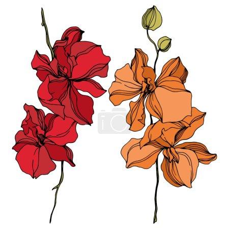 Illustration pour Fleurs botaniques florales d'orchidée. Feuille sauvage de printemps fleur sauvage isolée. Encre gravée en noir et blanc. Elément d'illustration d'orchidées isolées sur fond blanc . - image libre de droit