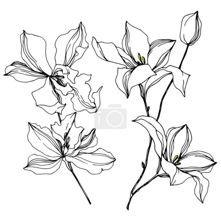Vector Orchid floral botanical flowers. Black and white engraved ink art. Isolated orchids illustration element.