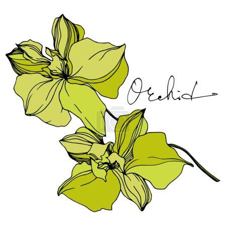 Ilustración de Flores botánicas florales Vector Orchid. Hoja de primavera silvestre wildflower aislado. Arte de tinta grabada en blanco y negro. Elemento de ilustración de orquídeas aisladas sobre fondo blanco. - Imagen libre de derechos