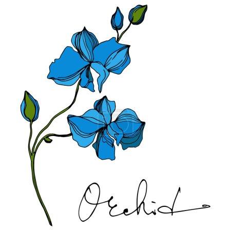 Illustration pour Fleurs botaniques florales d'orchidée vectorielle. Fleur sauvage de neige sauvage de feuille de source d'isolement. Art d'encre gravé noir et blanc. Élément d'illustration d'orchidées d'isolement sur le fond blanc. - image libre de droit