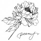 "Постер, картина, фотообои ""Peony floral botanical flowers. Black and white engraved ink art. Isolated peonies illustration element."""