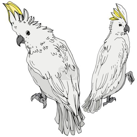 Illustration for Vector Sky bird cockatoo in a wildlife. Wild freedom, bird with a flying wings. Black and white engraved ink art. Isolated parrot illustration element on white background. - Royalty Free Image