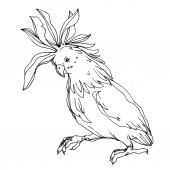 "Постер, картина, фотообои ""Vector Sky bird cockatoo in a wildlife isolated. Black and white engraved ink art. Isolated parrot illustration element."""