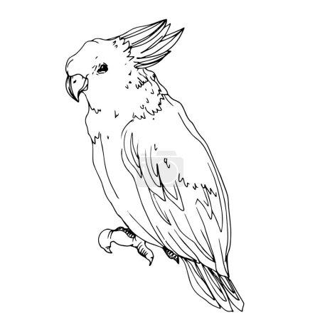 Illustration pour Vector Cacatoès des oiseaux du ciel dans une faune isolée. Liberté sauvage, oiseau aux ailes volantes. Encre gravée en noir et blanc. Élément d'illustration isolé pour perroquet . - image libre de droit