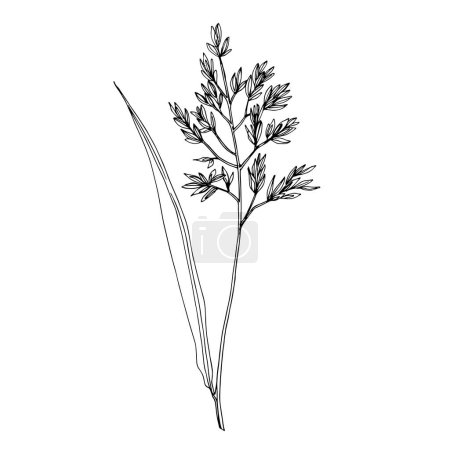Illustration pour Vector Wildflowers floral botanical flowers. Wild spring leaf wildflower isolated. Black and white engraved ink art. Isolated flower illustration element on white background. - image libre de droit