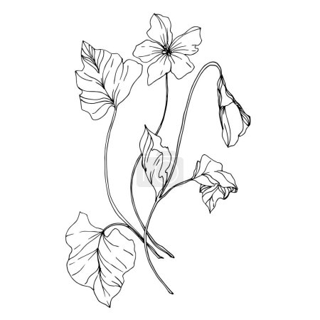 Illustration for Vector Wildflowers floral botanical flowers. Wild spring leaf wildflower isolated. Black and white engraved ink art. Isolated flower illustration element on white background. - Royalty Free Image