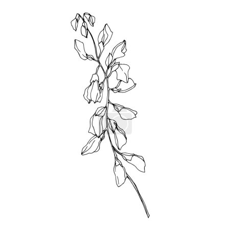 Illustration for Vector Wildflower floral botanical flowers. Wild spring leaf wildflower isolated. Black and white engraved ink art. Isolated flower illustration element. - Royalty Free Image