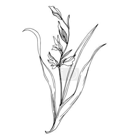 Illustration pour Vecteur Fleurs botaniques florales sauvages. Feuille sauvage de printemps fleur sauvage isolée. Encre gravée en noir et blanc. Elément d'illustration de fleurs isolées . - image libre de droit