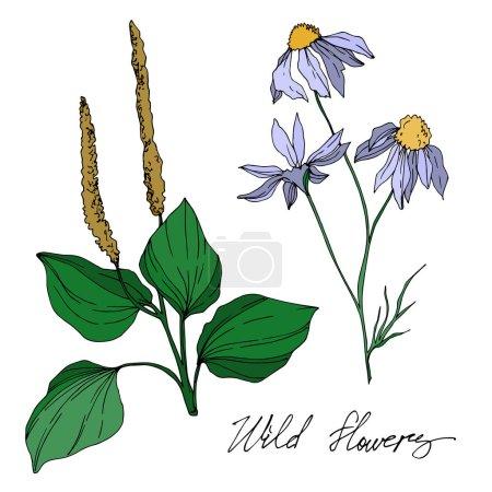 Illustration pour Fleurs sauvages vectorielles fleurs botaniques florales. Feuille sauvage de printemps fleur sauvage isolée. Encre gravée en noir et blanc. Elément d'illustration de fleurs isolées . - image libre de droit