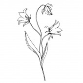 Vector wildflowers floral botanical flowers Black and white engraved ink art Isolated flower illustration element