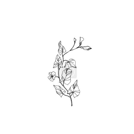 Illustration for Vector Wildflowers floral botanical flowers. Wild spring leaf wildflower isolated. Black and white engraved ink art. Isolated flower illustration element. - Royalty Free Image