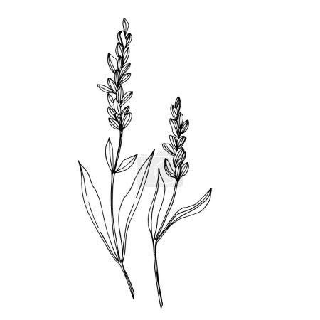 Fleurs botaniques florales vectorielles sauvages. Encre gravée en noir et blanc. Elément d'illustration de fleurs sauvages isolées .