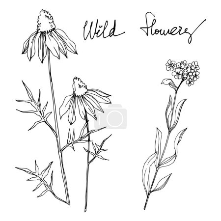 Illustration for Vector wildflower floral botanical flowers. Wild spring leaf wildflower isolated. Black and white engraved ink art. Isolated wildflowers illustration element. - Royalty Free Image