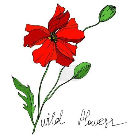 Illustration pour Vecteur Fleurs sauvages fleurs botaniques florales. Feuille sauvage de printemps fleur sauvage isolée. Encre gravée en noir et blanc. Elément d'illustration de fleurs isolées . - image libre de droit