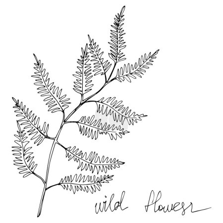 Illustration for Vector Wildflowers floral botanical flowers. Wild spring leaf wildflower isolated. Black and white engraved ink art. Isolated flowers illustration element. - Royalty Free Image