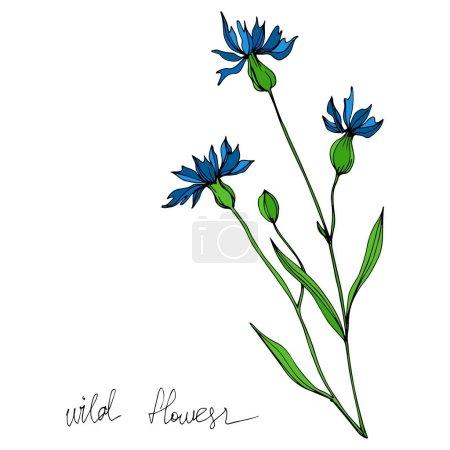 Illustration pour Vector Fleurs florales botaniques. Isolement de fleurs sauvages printanières. Encre noire et blanche gravée. Illustration de fleurs isolées. - image libre de droit