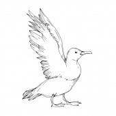 Vector Sky bird seagull isolated Black and white engraved ink art Isolated seagull illustration element