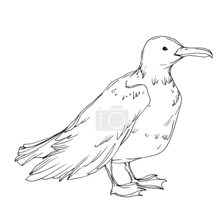 Illustration for Vector Sky bird seagull isolated. Wild freedom, bird with a flying wings. Black and white engraved ink art. Isolated seagull illustration element on white background. - Royalty Free Image