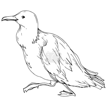 Illustration for Vector Sky bird seagull in a wildlife isolated. Wild freedom, bird with a flying wings. Black and white engraved ink art. Isolated seagull illustration element on white background. - Royalty Free Image