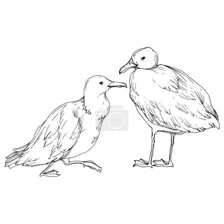 Illustration pour Vector Oiseau céleste mouette dans une faune isolée. Liberté sauvage, oiseau aux ailes volantes. Encre gravée en noir et blanc. Elément d'illustration de mouette isolé sur fond blanc . - image libre de droit