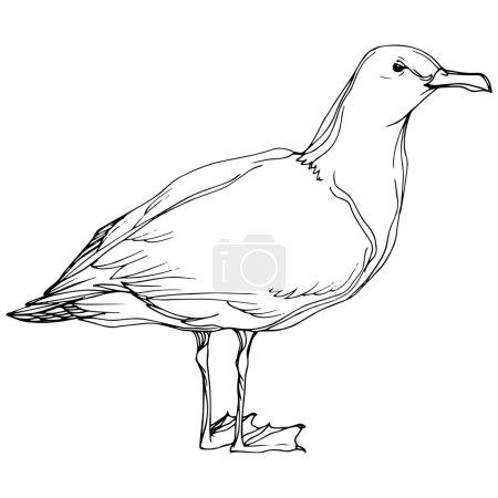 Illustration pour Vector Oiseau céleste mouette dans une faune sauvage. Encre gravée en noir et blanc. Elément d'illustration de mouette isolé sur fond blanc . - image libre de droit