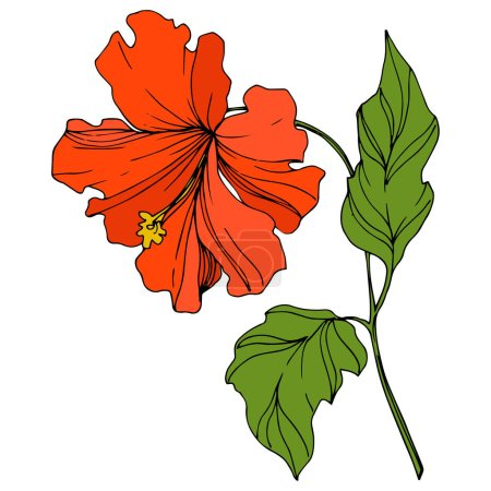 Illustration for Vector Tropical floral botanical flower. Exotic tropical hawaiian summer. Engraved ink art. Isolated flowers illustration element. - Royalty Free Image