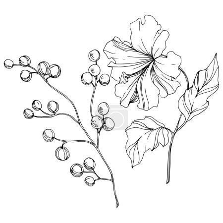 Illustration pour Vector Fleur botanique florale tropicale. Été hawaïen tropical exotique. Encre gravée en noir et blanc. Elément d'illustration de fleurs isolées sur fond blanc . - image libre de droit