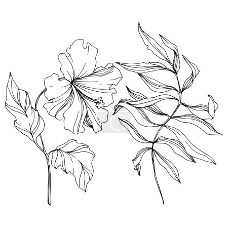 Illustration for Vector Tropical floral botanical flower. Exotic tropical hawaiian summer. Black and white engraved ink art. Isolated flowers illustration element on white background. - Royalty Free Image