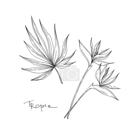 Illustration for Vector Tropical floral botanical flowers. Wild spring leaf wildflower isolated. Black and white engraved ink art. Isolated flower illustration element on white background. - Royalty Free Image