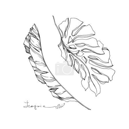 Illustration pour Vecteur Été hawaïen tropical exotique. Palm plage arbre feuilles jungle botanique. Encre gravée en noir et blanc. Feuilles isolées élément d'illustration . - image libre de droit