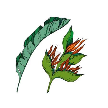 Illustration pour Vector Fleurs florales tropicales. Isolement de fleurs sauvages printanières. Encre noire et blanche gravée. Illustration florale isolée sur fond blanc. - image libre de droit