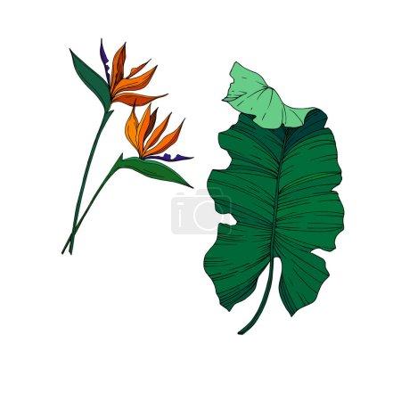 Illustration pour Vector Fleurs botaniques florales tropicales. Feuille sauvage de printemps fleur sauvage isolée. Encre gravée en noir et blanc. Elément d'illustration de fleur isolé sur fond blanc . - image libre de droit
