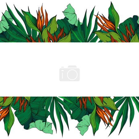 Illustration for Vector Tropical floral botanical flowers. Wild spring leaf wildflower isolated. Black and white engraved ink art. Frame border ornament square on white background. - Royalty Free Image