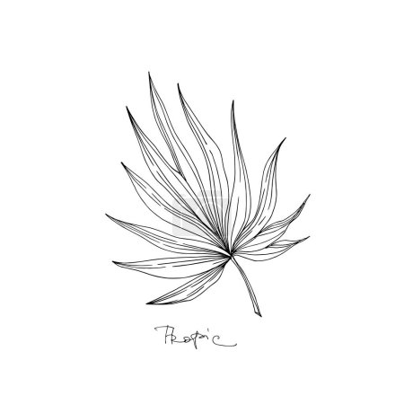 Illustration for Vector Exotic tropical hawaiian summer. Palm beach tree leaves jungle botanical. Black and white engraved ink art. Isolated leaves illustration element. - Royalty Free Image