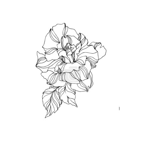 Illustration for Vector Roses floral botanical flowers. Wild spring leaf wildflower isolated. Black and white engraved ink art on white background. Isolated roses illustration element. - Royalty Free Image