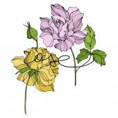 Vector Rose floral botanical flowers Engraved ink art Isolated roses illustration element
