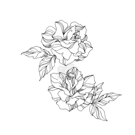 Illustration for Vector Rose floral botanical flowers. Wild spring leaf wildflower isolated. Black and white engraved ink art. Isolated rose illustration element on white background. - Royalty Free Image