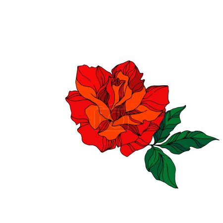 Illustration for Vector Rose floral botanical flower. Wild spring leaf wildflower isolated. Red and green engraved ink art. Isolated rose illustration element on white background. - Royalty Free Image