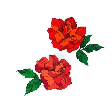 Illustration pour Vector Fleurs botaniques florales roses. Feuille sauvage de printemps fleur sauvage isolée. Encre gravée rouge et verte. Elément d'illustration isolé rose sur fond blanc . - image libre de droit