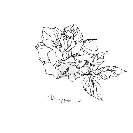 Wektor Rose kwiatowy kwiat botaniczny. Czarno-biała grawerowana sztuka tuszu. Izolowany element ilustracji róży.