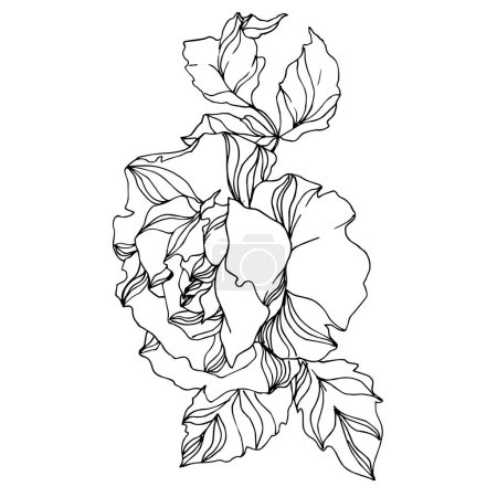 Illustration for Vector Roses floral botanical flowers. Wild spring leaf wildflower isolated. Black and white engraved ink art. Isolated rose illustration element on white background. - Royalty Free Image
