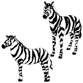 "Постер, картина, фотообои ""Vector Exotic zebra wild animal isolated. Black and white engraved ink art. Isolated animal illustration element."""