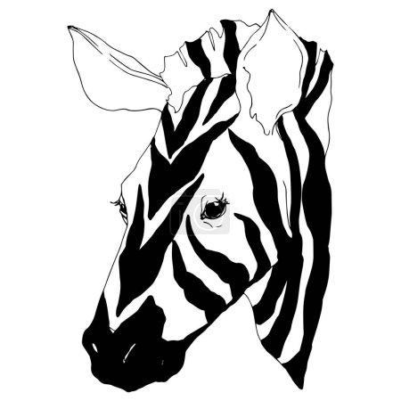 Ilustración de Vector Exotic zebra wild animal isolated. Black and white engraved ink art. Isolated animal illustration element on white background. - Imagen libre de derechos