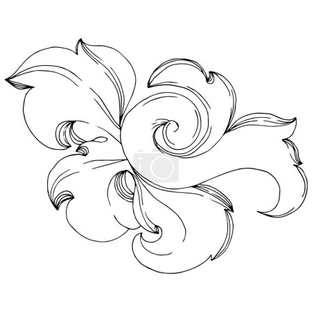 Illustration for Vector Baroque monogram floral ornament. Baroque design isolated elements. Black and white engraved ink art. Isolated ornaments illustration element on white background. - Royalty Free Image