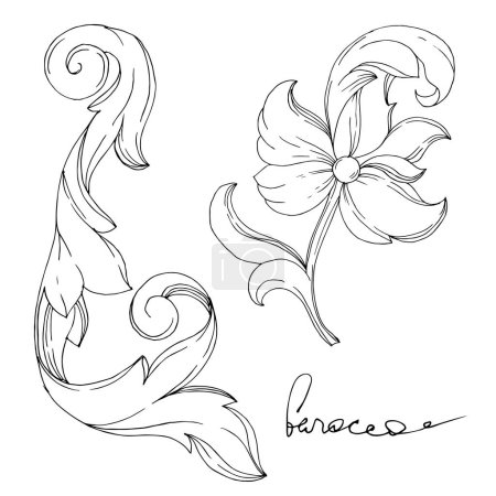 Illustration pour Vector Golden monogram floral ornament. Baroque design elements. Isolated ornament illustration element on white background. Black and white engraved ink art. - image libre de droit
