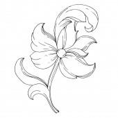 Vector Golden monogram floral ornament Isolated ornament illustration element Black and white engraved ink art