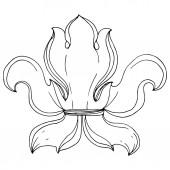Vector Baroque monogram floral ornament Black and white engraved ink art Isolated monogram illustration element