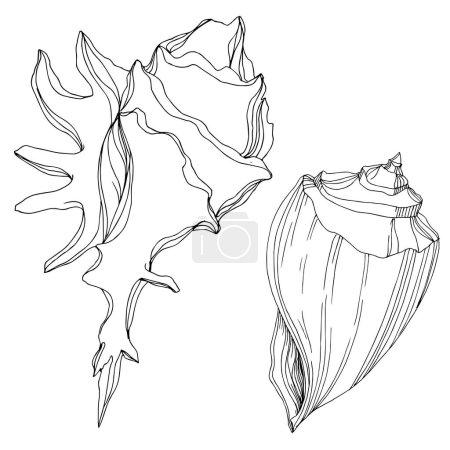 Ilustración de Vector Summer playa de conchas tropicales. Arte de tinta grabada en blanco y negro. Elemento de ilustración de vaciado aislado sobre fondo blanco. - Imagen libre de derechos